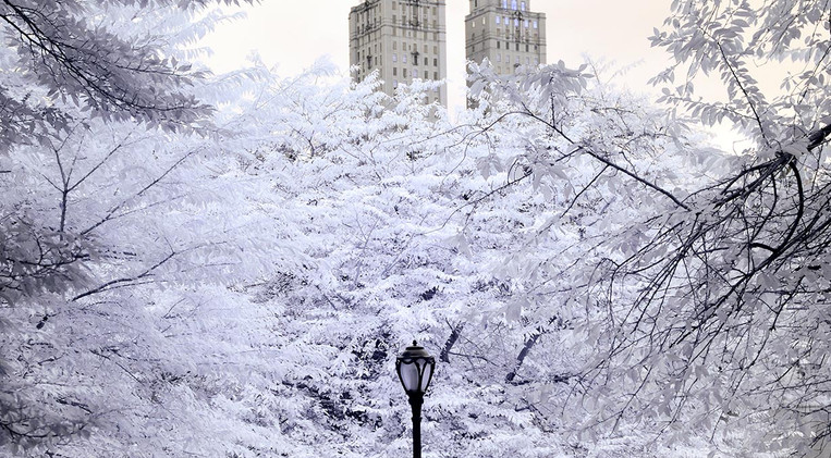 Central Park in Infrared