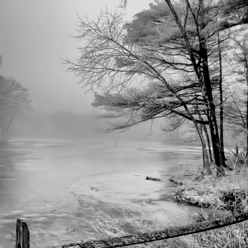Wintery Fog