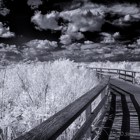A Walk in the Everglades