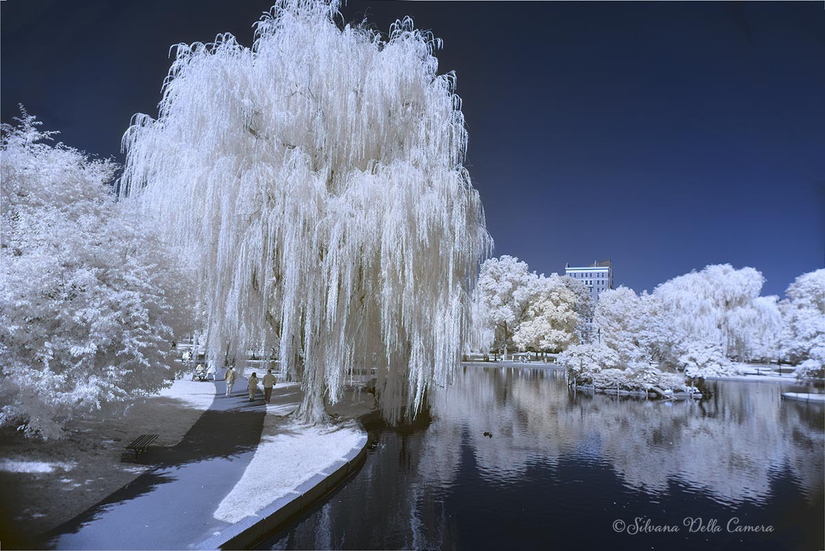 Boston Public Garden in Infrared
