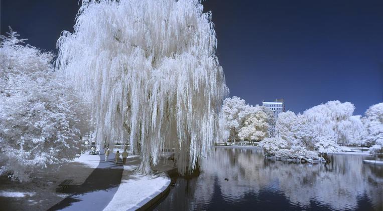 Boston Public Garden in Infrared