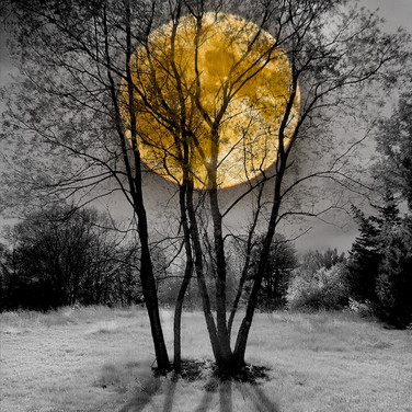 Moon in Autumn