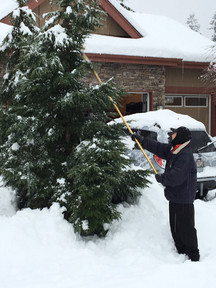 Tom clearing some branches of the heavy snow...