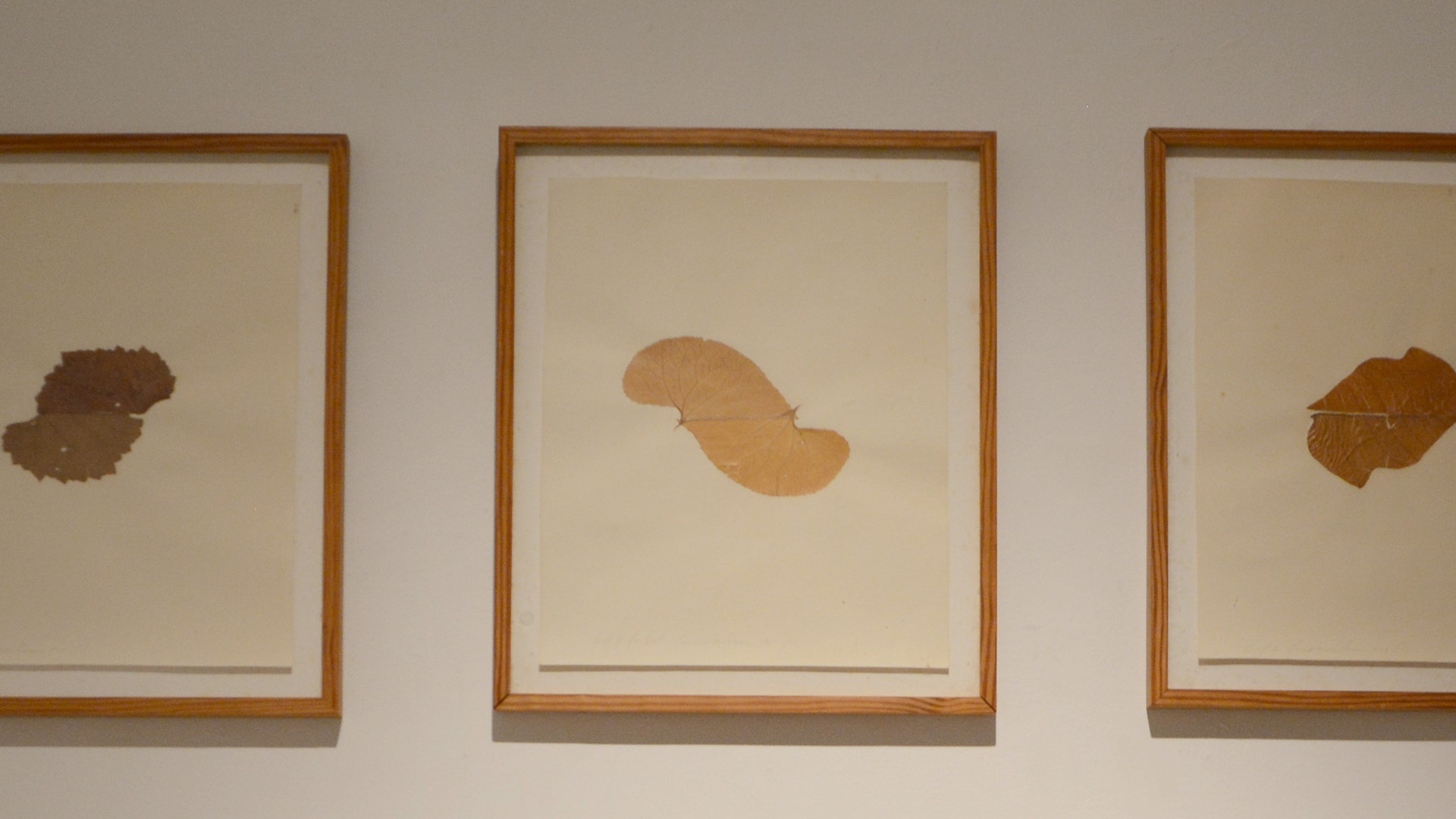 """Linda Francis """"Leaf (For Hal) 1"""", """"Leaf (For Hal) 2"""", """"Leaf (For Hal) 3"""""""