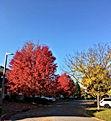 autumn tree1.jpeg