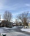 winter tree.jpeg