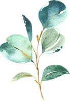EucalyptusElements_017.png