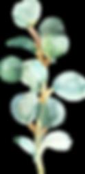 EucalyptusElements_010.png
