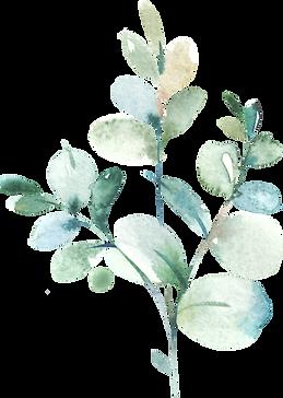 EucalyptusElements_03.png