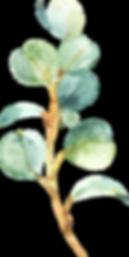 EucalyptusElements_06.png