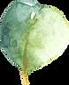 EucalyptusElements_018.png