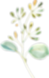 EucalyptusElements_08.png