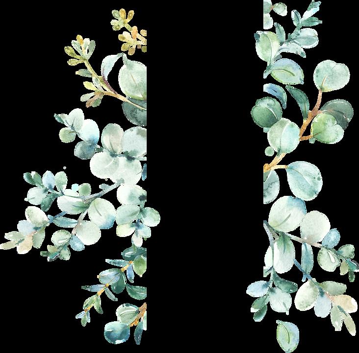 EucalyptusFrames_03_edited.png