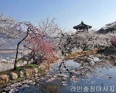 광양출장마사지 | 라인마사지 | 한국
