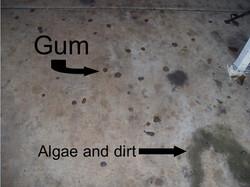Gum- JPEG