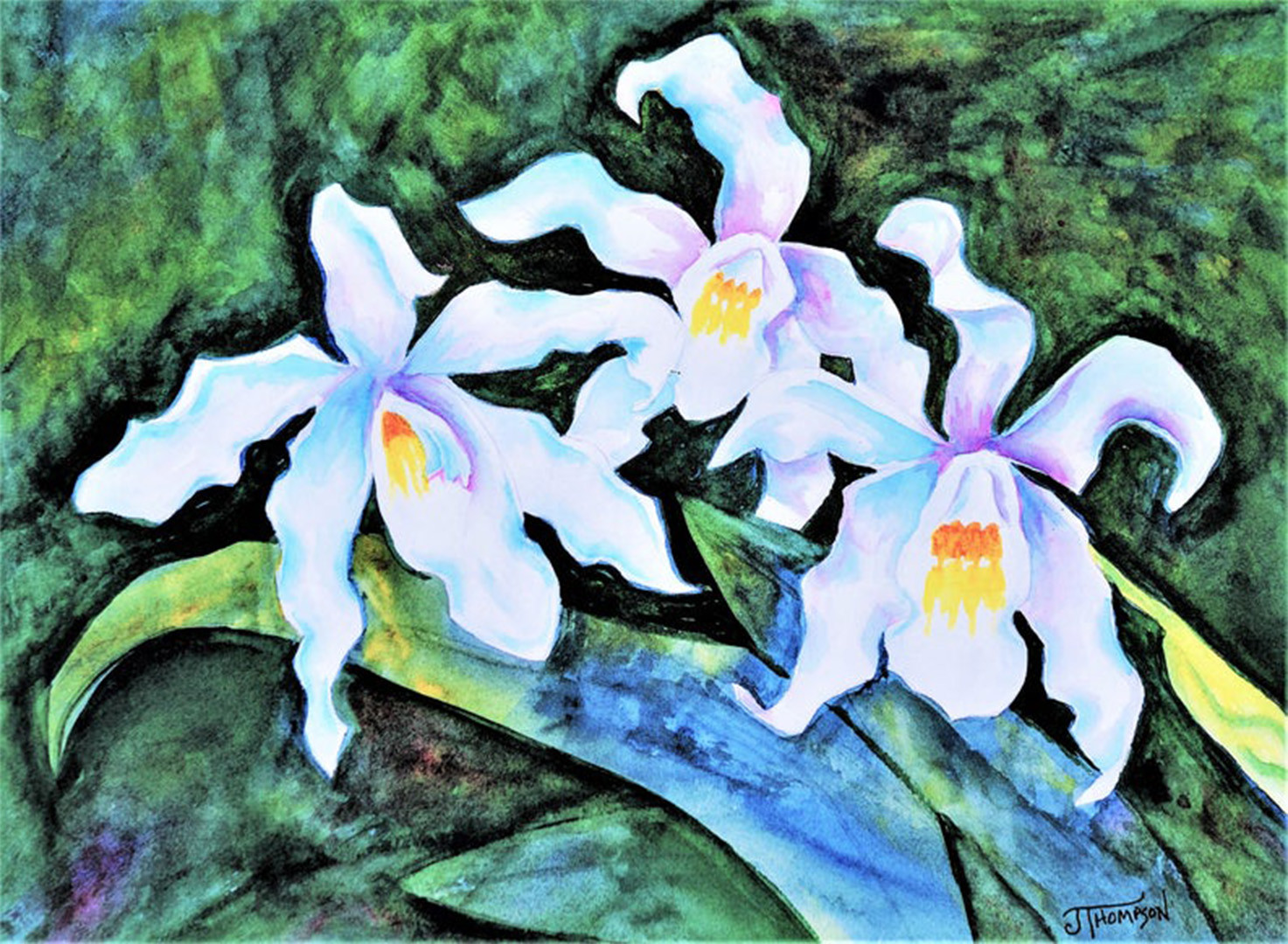 White Queen Orchids
