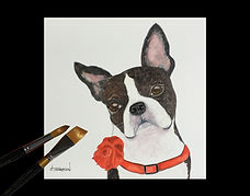 Boston Terrier Portrait | © 2020 Judy Thompson | Watercolor Addict | Abstract Art of Lady J