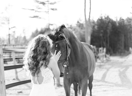 Equestrian Mini Sessions