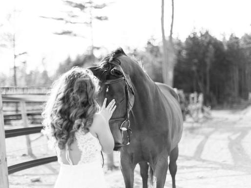 Equestrian Mini Sessions
