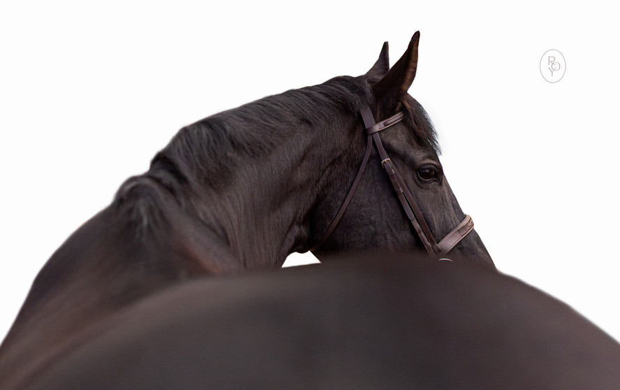 Marie-Roy-Photography-Equine-Portrait--2