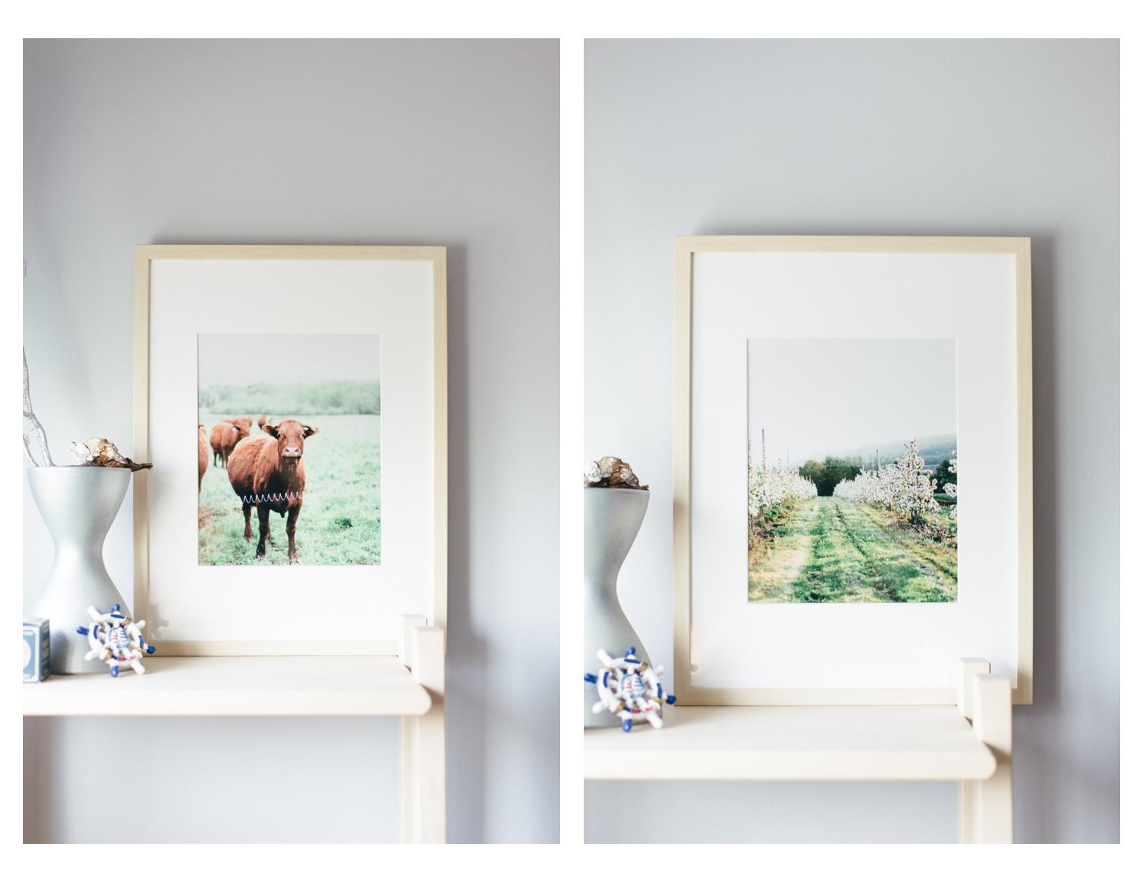 Blomidon, Canning, Annapolis Valley Nova Scotia Apple Blossoms, prints, frames