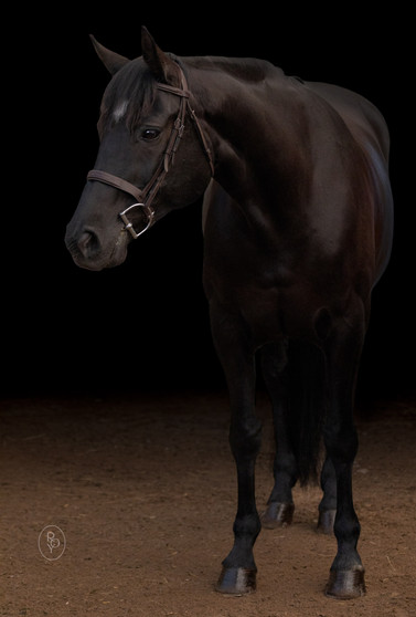 Marie-Roy-Photography-Equestrian--7.JPG