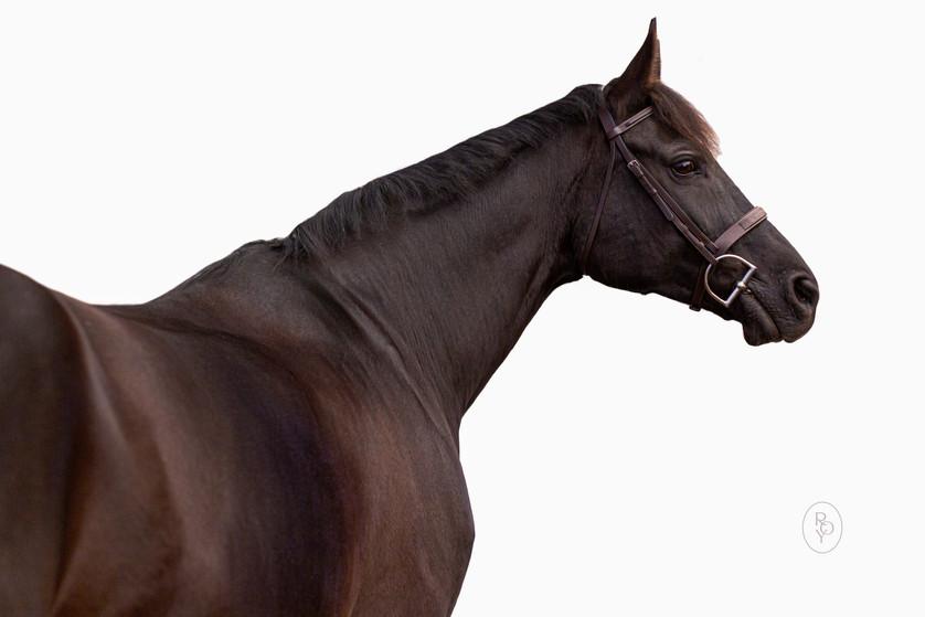Marie-Roy-Photography-Equine-Portrait-.J