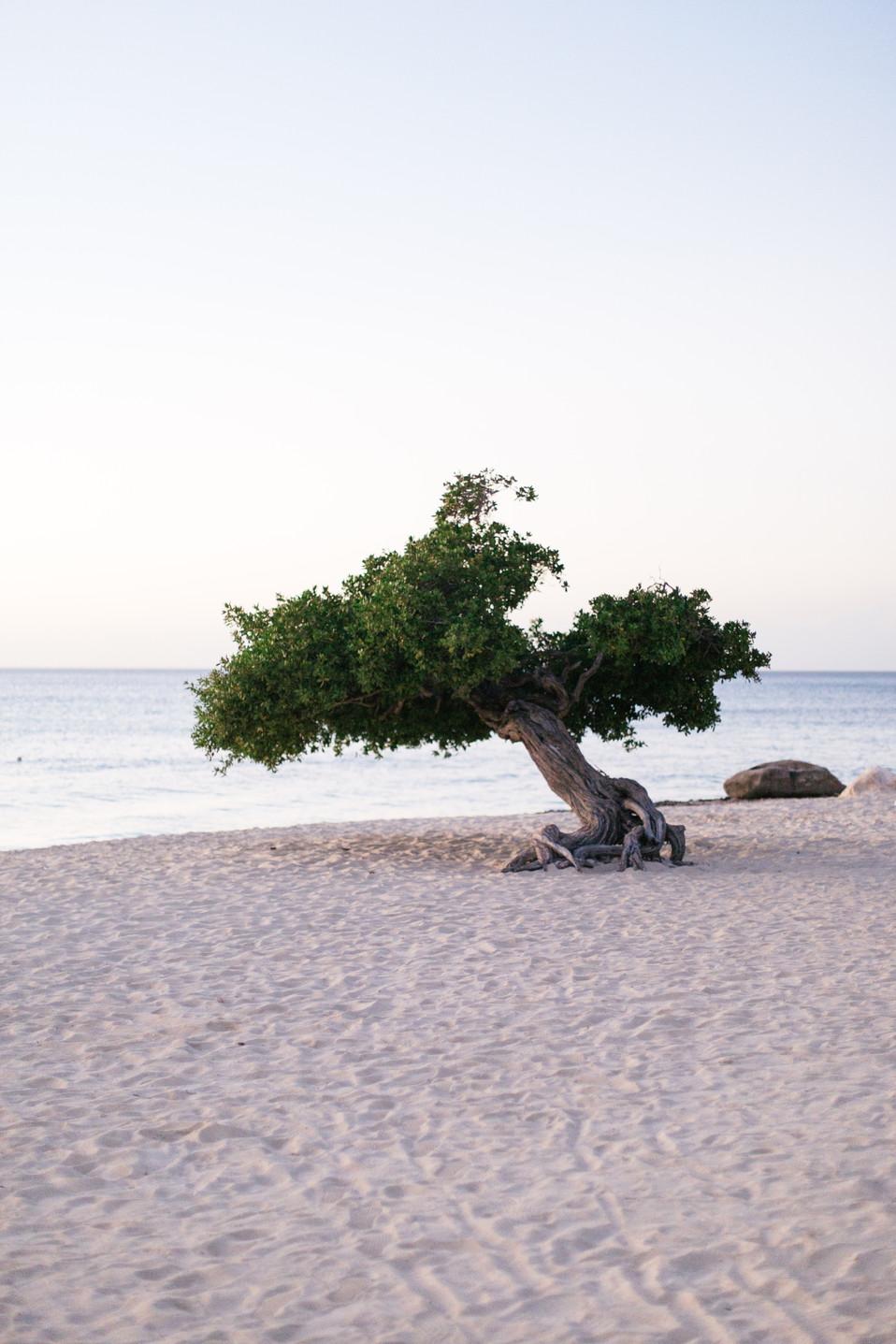 MarieRoy-Aruba-Vacation-1021.JPG