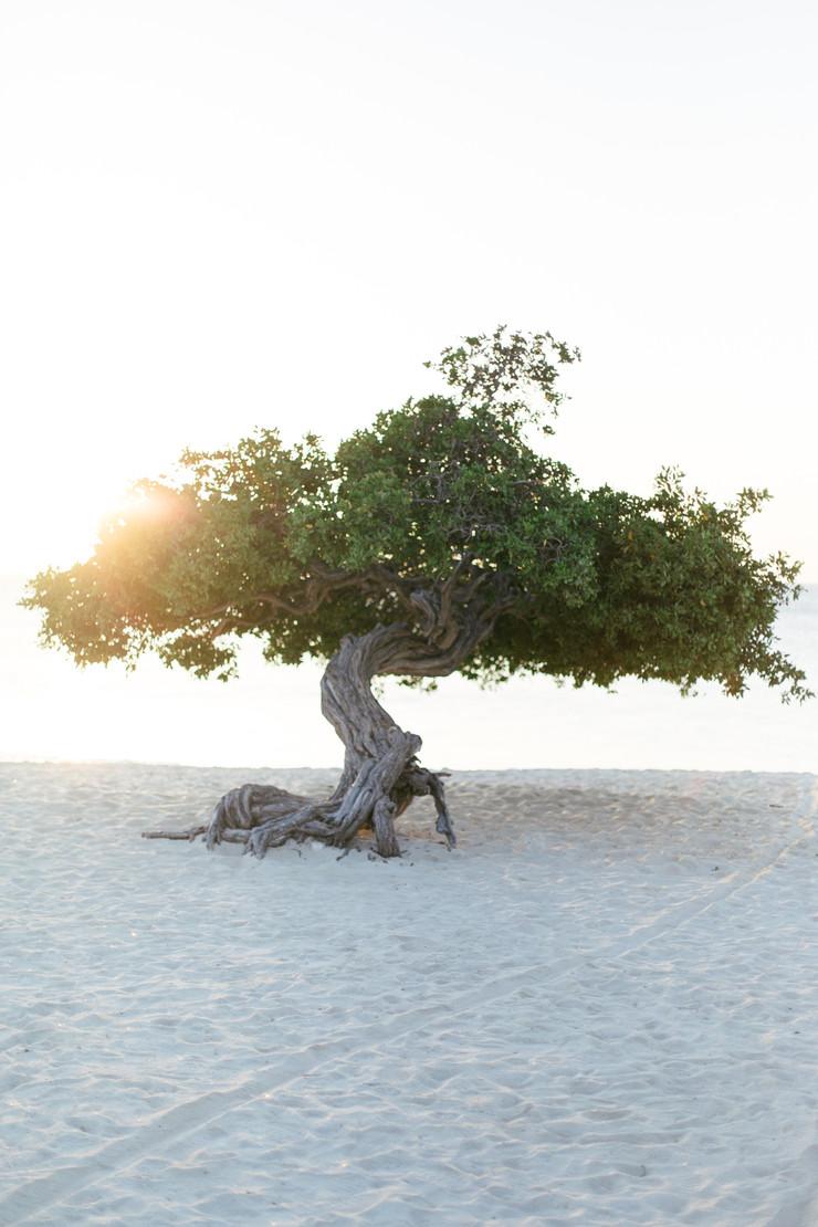 MarieRoy-Aruba-Vacation-0984.JPG