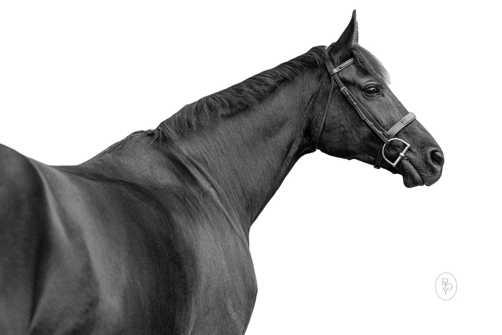 Marie-Roy-Photography-Equestrian--3.JPG