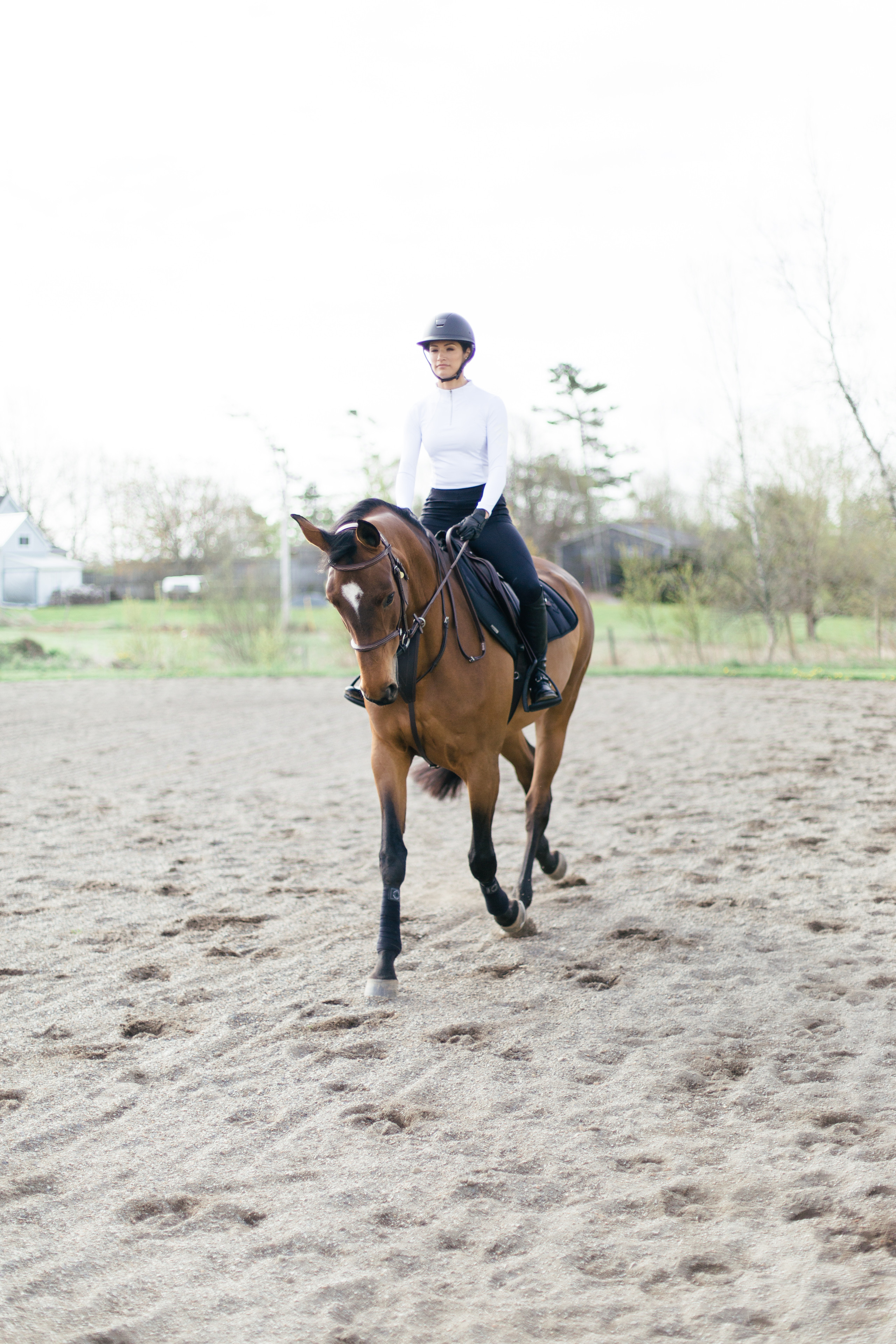 Aztec Diamond and CWD Equestrian