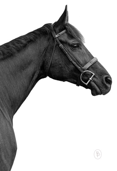 Marie-Roy-Photography-Equestrian--4.JPG