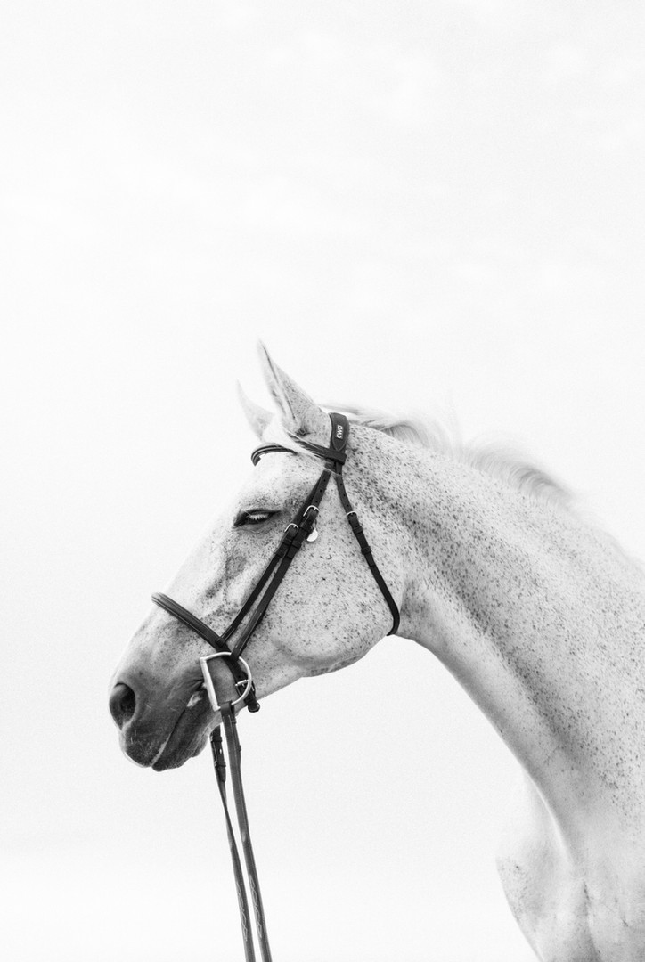 Marie-Roy-Photography-Equestrian-4279-2.