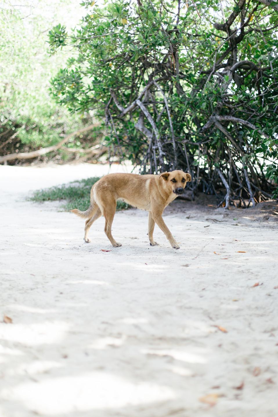 MarieRoy-Aruba-Vacation-0832.JPG