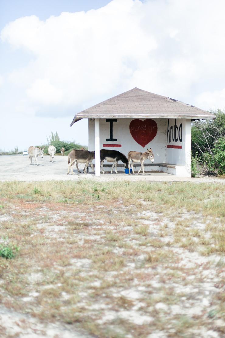 MarieRoy-Aruba-Vacation-1059.JPG