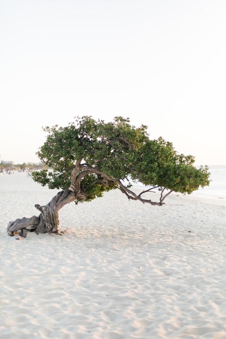 MarieRoy-Aruba-Vacation-0988.JPG