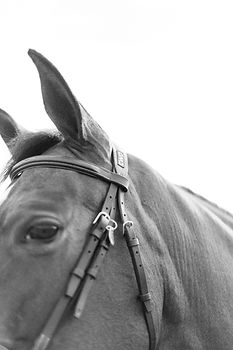 Marie-Roy-Photography-XXX-Equestrian-420
