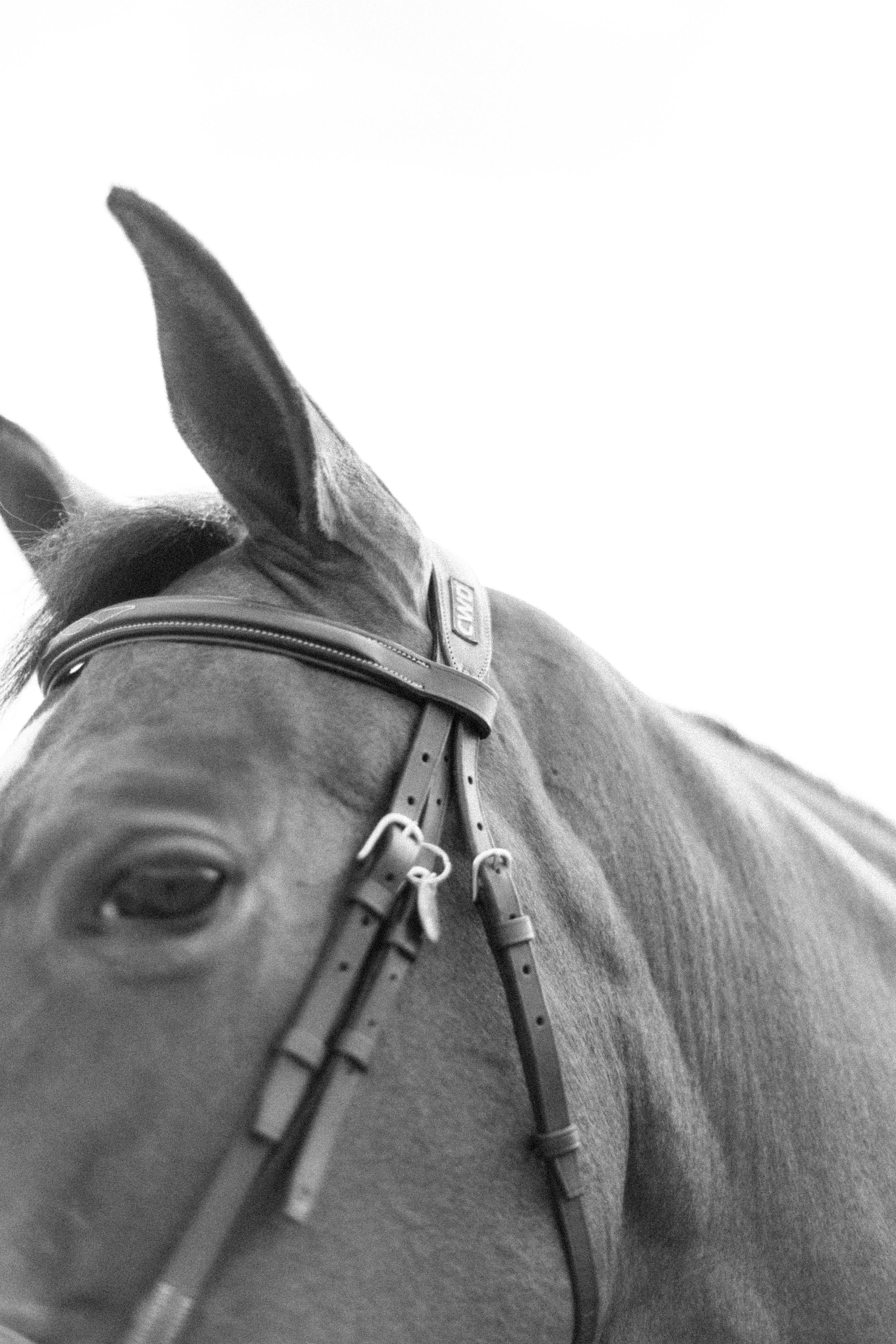 CWD equestrian, struck apparel, alexa fairchild