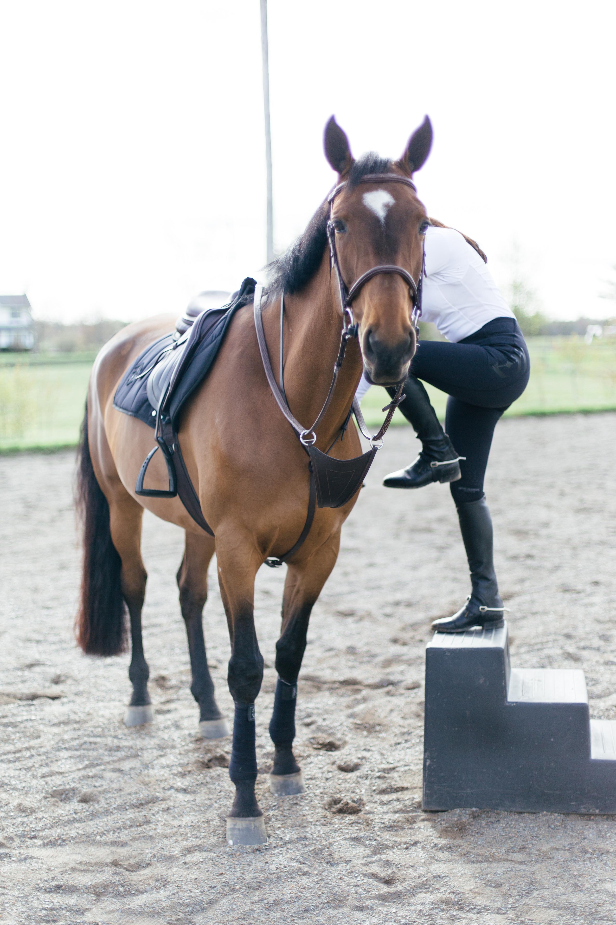 Aztec Diamond Equestrian, CWD Equestrian