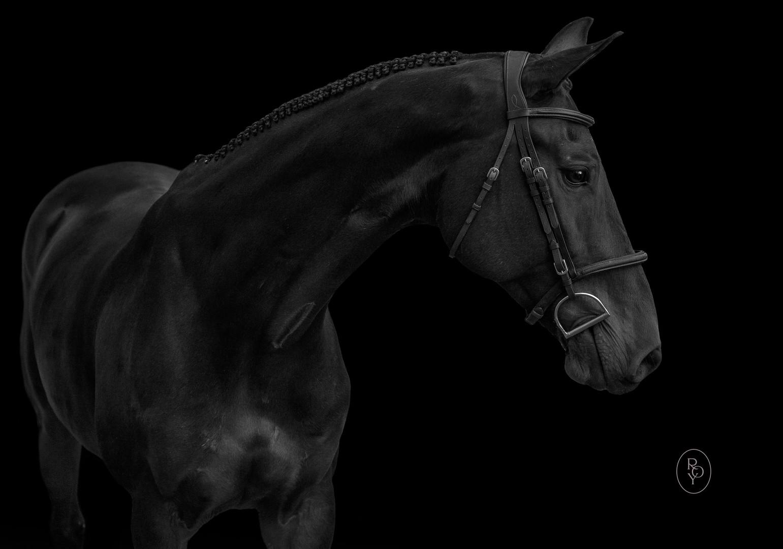 Marie-Roy-Photography-Equestrian-2-3.JPG