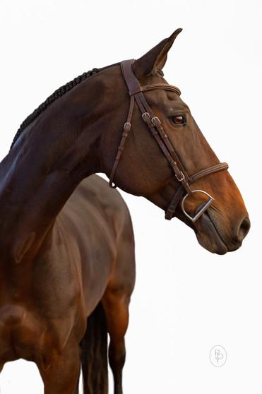 Marie-Roy-Photography-Equestrian--8.JPG