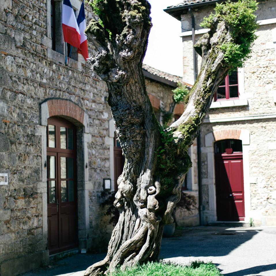 MarieRoy-Lyon-France-2243.jpg