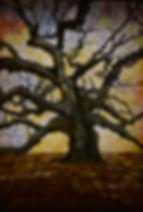 Angel Oak Lightbox