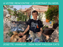 Rencontre avec Josette Vanneur – fondatrice de la Siem Reap Pagoda Cats.