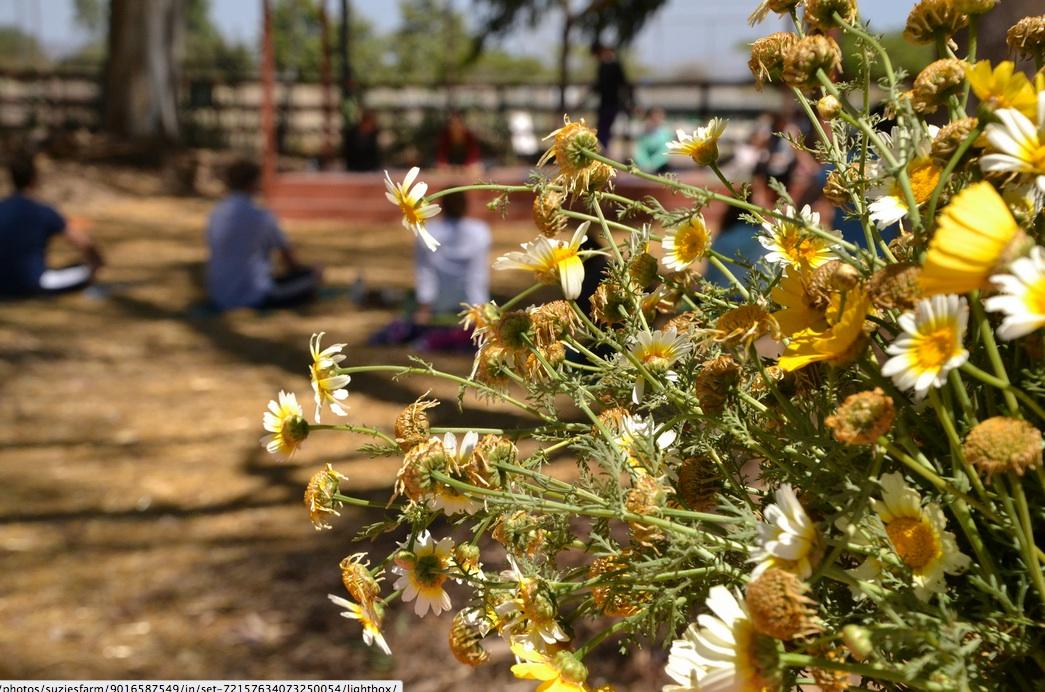 Farm To Yoga: Practice, Tour, Dinner