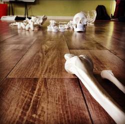 bones, anatomy IYTT
