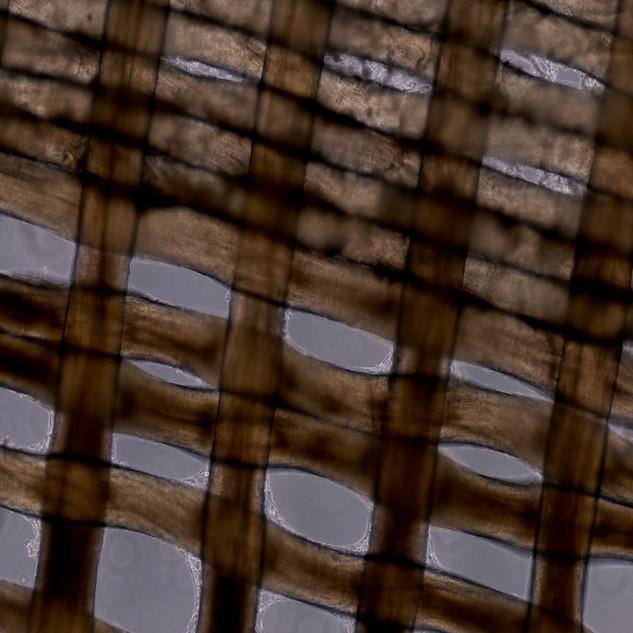 Biotextile n=1, micrograph