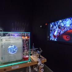 The Ossificatorium, installation
