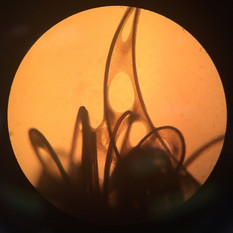 Biotextile n=x, microscopic detail