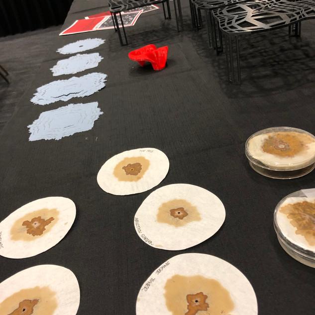 SLSA Useful Fictions installation